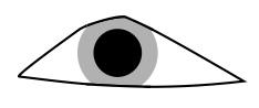 Triangle Eyes